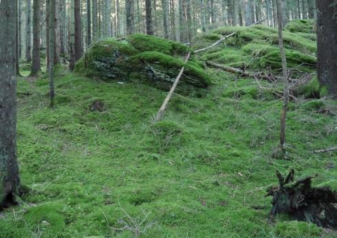 Hällaskogen (8 av 26)